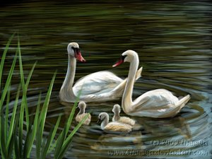 Swan_family_by_Linuska